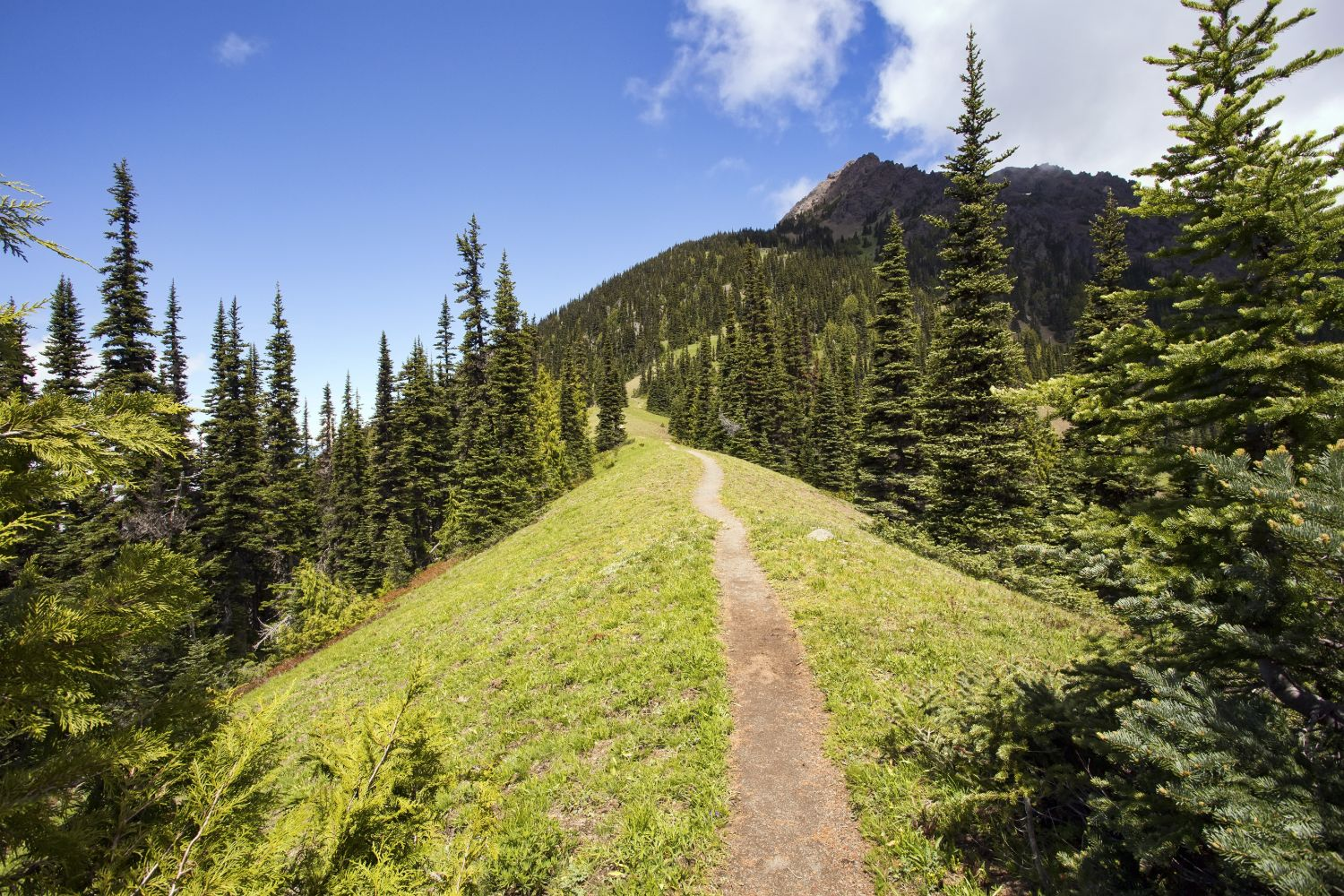 hotels near olympic national park