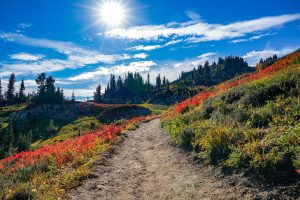 best-hikes-in-mount-rainier-national-park