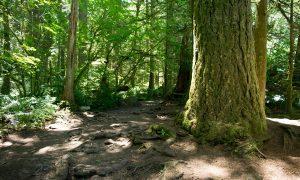 twin falls trail 4