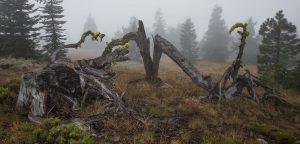 desolation peak trail 3