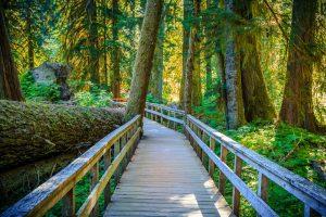 grove of the patriarchs loop 3