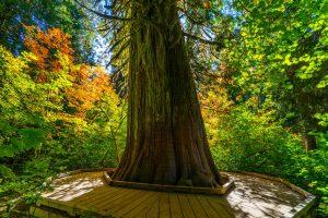 grove of the patriarchs loop 4