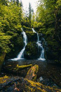 quinault loop trail 1