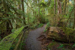 quinault loop trail 2