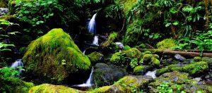 quinault loop trail 3