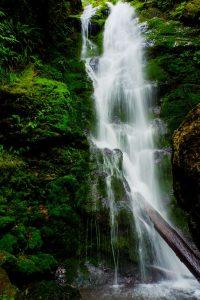 quinault loop trail 4