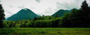 quinault loop trail 5