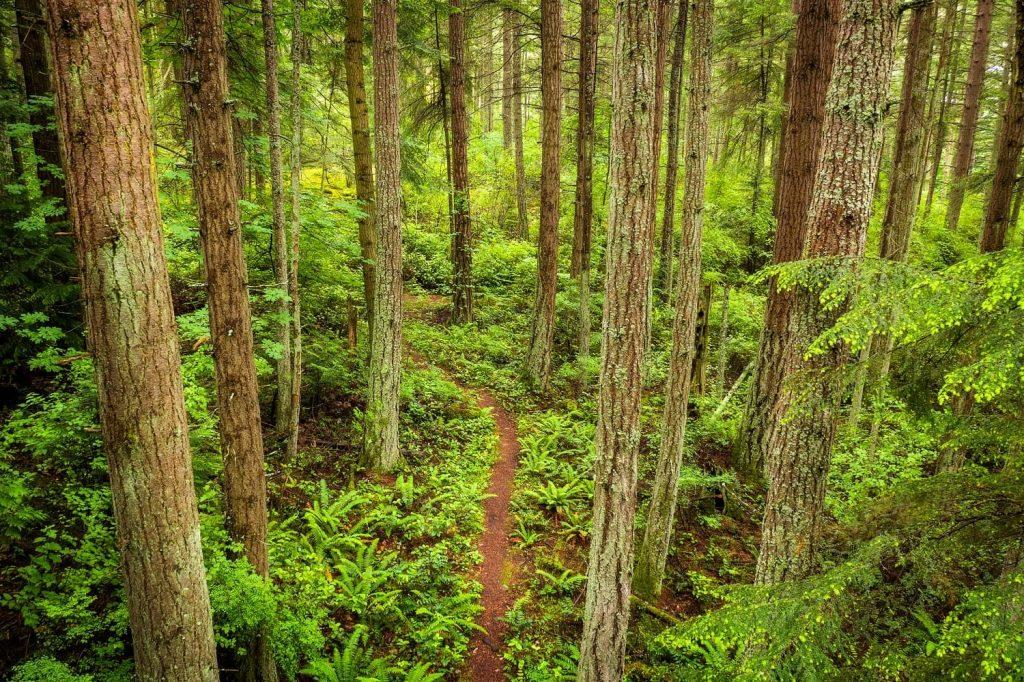 trail of the cedars 1