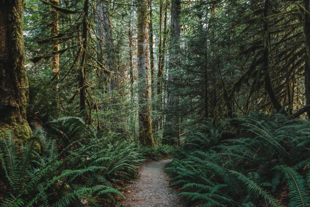 trail of the cedars 2