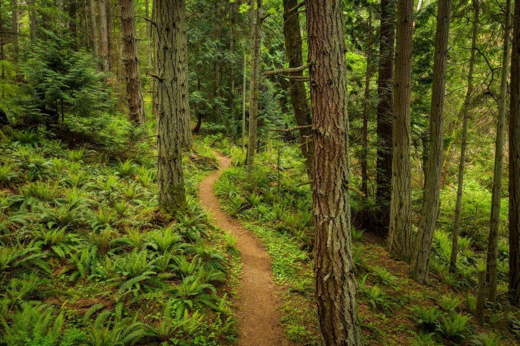 trail of the cedars 3