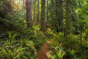 trail of the cedars 4