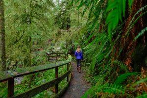 trail of the cedars 5